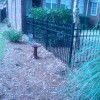 Aluminum Fence – Fit For Puppies